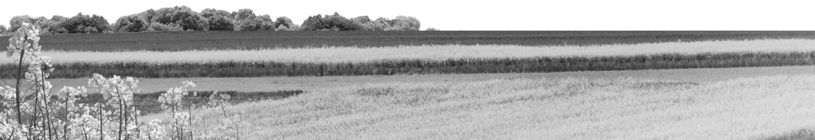 Oferta Mazowieckiego Ośrodka Doradztwa Rolniczego