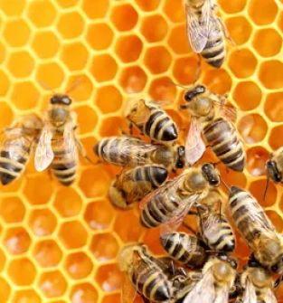 Pszczelarstwo Zwalczanie Warrozy Kwas mrówkowy Kwas karboksylowy eko