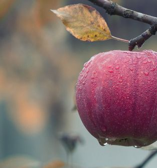 wiśnie, jabłka, czereśnie