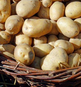 Ziemniaki jadalne Irga i Vineta
