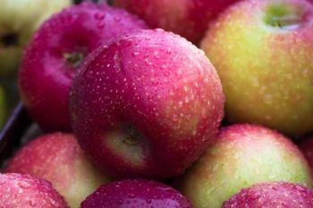Jabłka odmiana Najdared