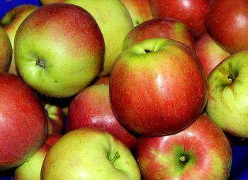 Jabłka odmiana Melrose