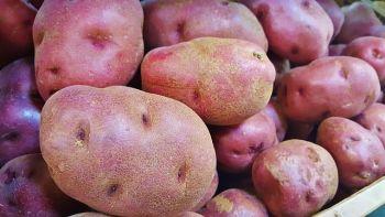 Ziemniaki jadalne Ricarda