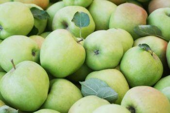 Jabłka odmiany Mutsu