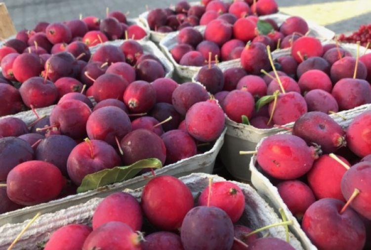 Jabłoń ozdobna Dolgo